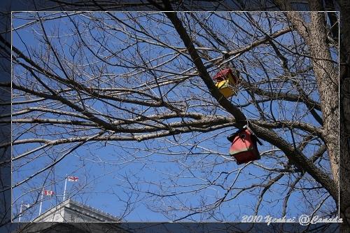 MONTREAL街景-鳥房
