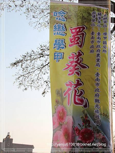 蜀葵花 (29)8.jpg