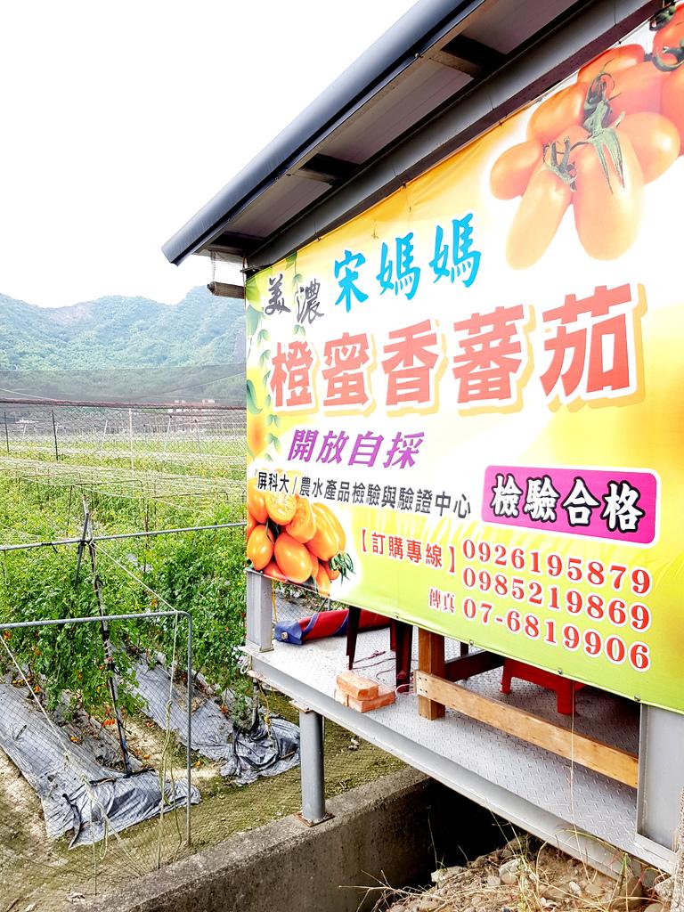 美濃採番茄 (2).jpg