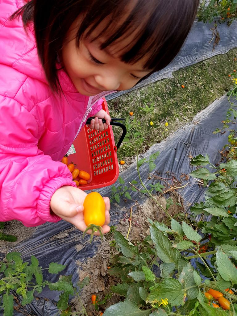 美濃採番茄 (11).jpg
