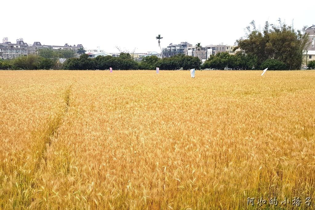小麥 (1).jpg