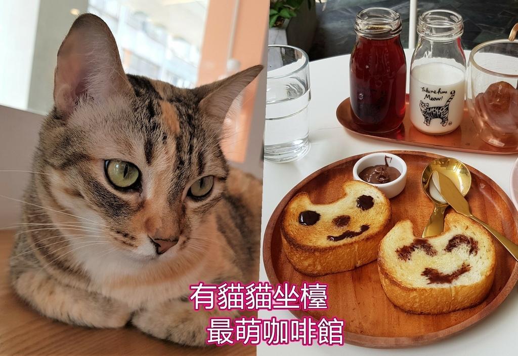 外帶一隻貓 (1).jpg