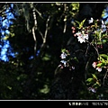 IMG_9302-012.JPG