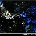 IMG_9304-014.JPG