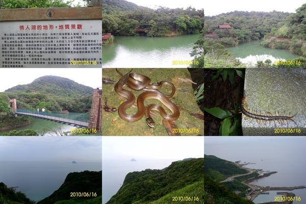 情人湖-生態