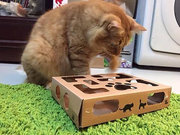 盒子+貓01