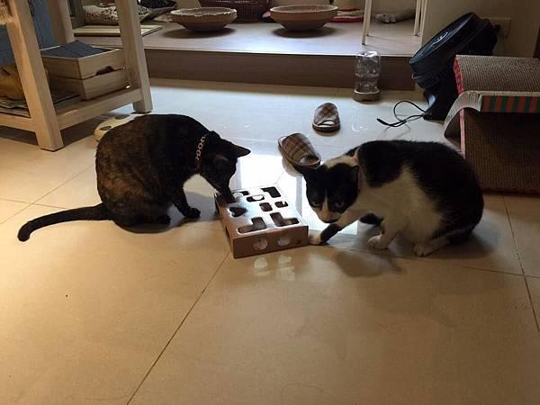 盒子+貓02