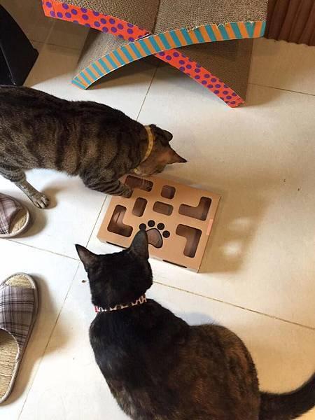 盒子+貓03