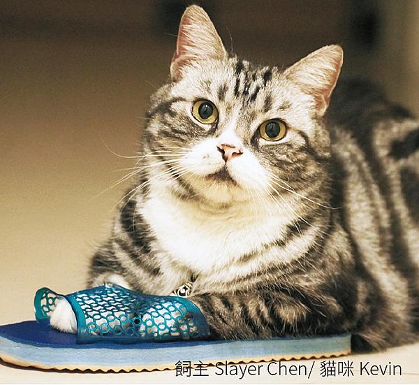 貓咪Kevin