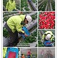 草莓趴_19.jpg
