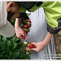 草莓趴兔團_28.jpg