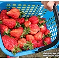 草莓趴兔團_29.jpg