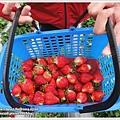 草莓趴兔團_30.JPG
