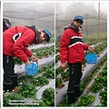 草莓趴兔團_31.jpg