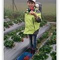 草莓趴兔團_32.jpg