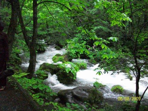 燕在日本照的奧入瀨溪