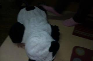 貓熊葦雋5