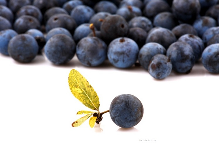 巴西莓12