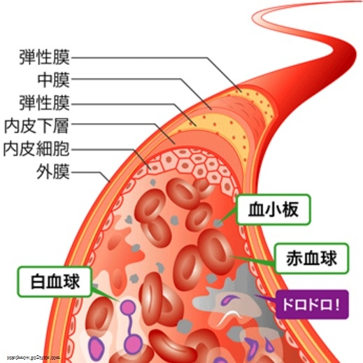 血管構造01.jpg