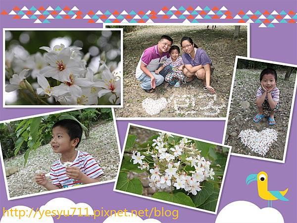 0420三義油桐花