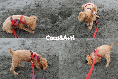 挖挖挖的caca
