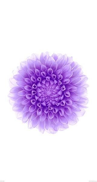 papersco-ac95-wallpaper-apple-iphone6-plus-ios8-flower-purple-5-wallpaper_9112dce15e84cb92da8f4f9df01aa93b_raw.jpg