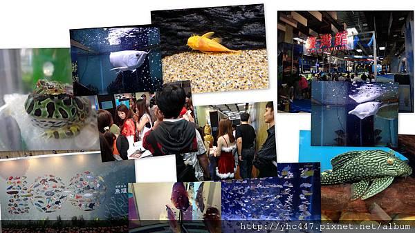 2011水族展.jpg