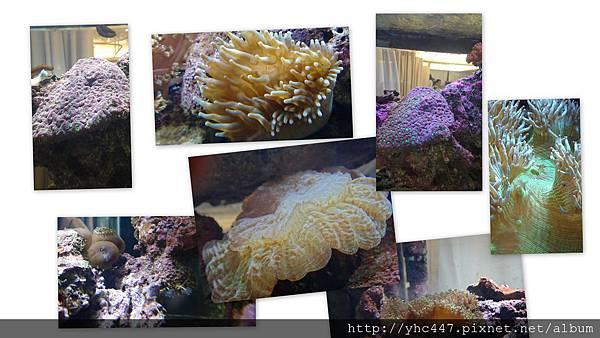 浮游生物餵食
