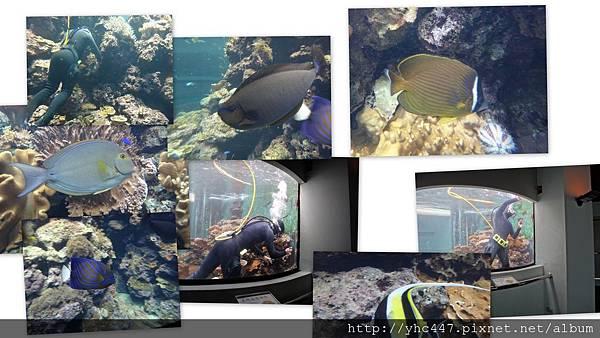 201205小琉球海生館