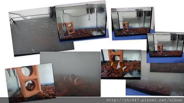 當天放魚一尺小丑缸