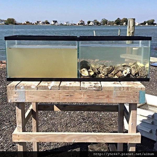 牡蠣過濾1-625x625