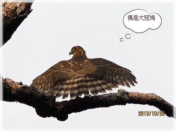 鳥_004