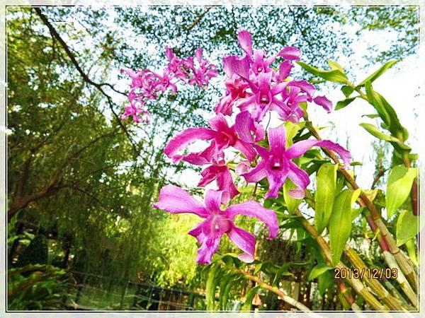 新化農舍庭園餐廳_002