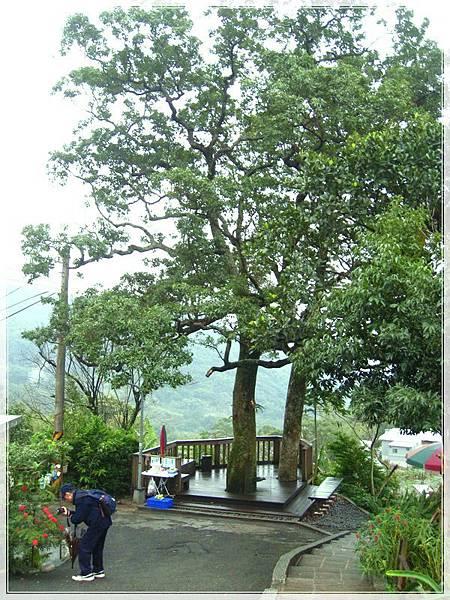 雨天的白石湖吊橋_040