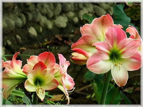 植物園-c_014.jpg