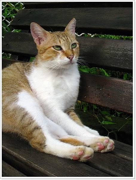 貓與花_043.JPG