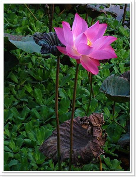 植物園-k_028.JPG