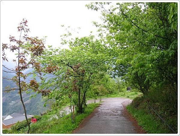 清境茶園步道_28.jpg