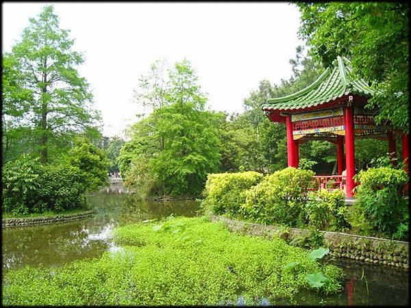 植物園紅冠水雞_18.jpg