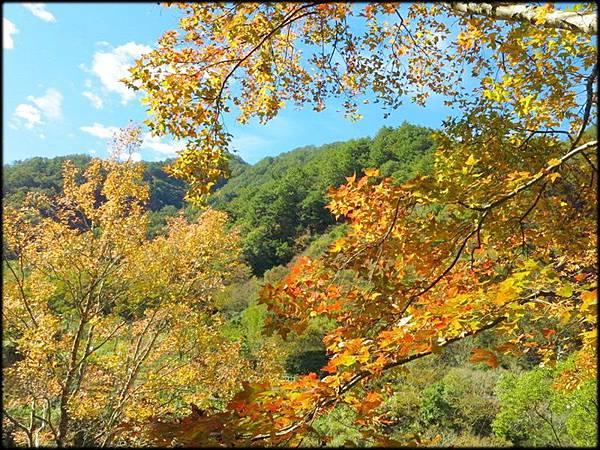 秀巒楓樹林_65.1.jpg