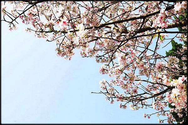 陽明山花卉試驗中心_45.jpg