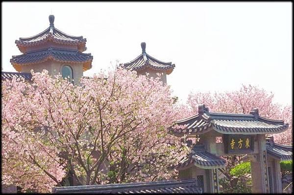 東方寺賞櫻_85.jpg