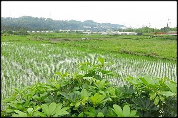 軟橋休閒步道_082.jpg