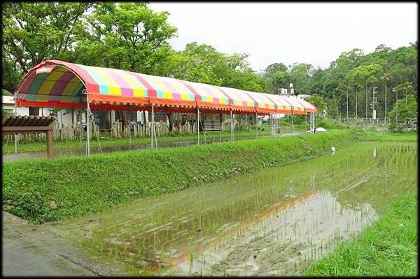 軟橋休閒步道_153.JPG