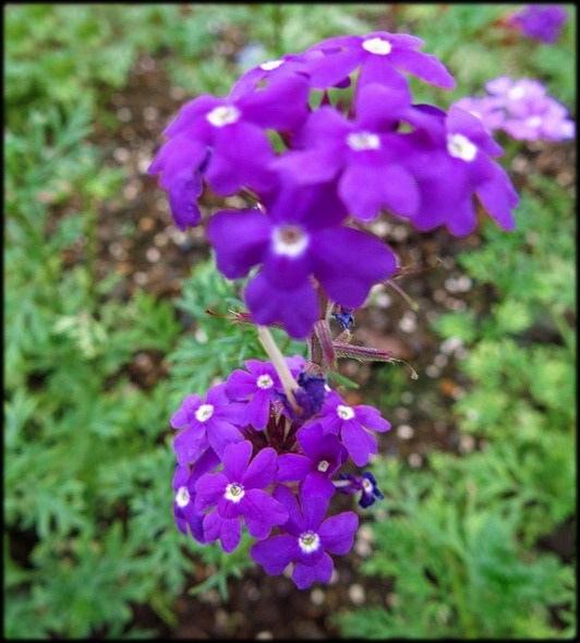 仁山植物園_051.jpg