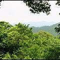 平湖森林步道_17.jpg