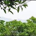 平湖森林步道_32.jpg