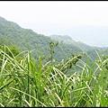 平湖森林步道_37.jpg