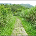 平湖森林步道_40.jpg