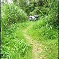 平湖森林步道_45.jpg